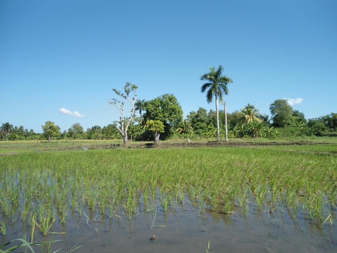 haiti2013 (2)